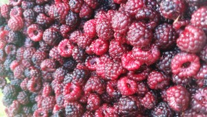 Black Raspberries from a Good Friend